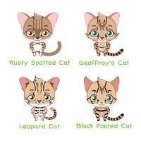 Ensemble d'espèces de chats sauvages de petite taille