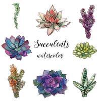 Ensemble de plantes succulentes. Aquarelle. Graphiques.Objets Isolés. Illustration vectorielle