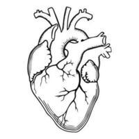 Contour du coeur réaliste vecteur