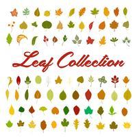 vecteur de collection de feuilles