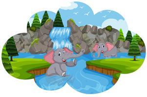 Éléphants jouant dans l'eau