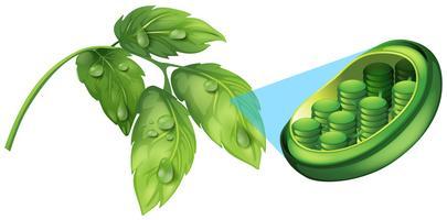 Feuilles vertes et diagramme de plante cellulaire vecteur