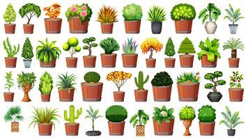 Ensemble de plante en pot vecteur