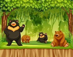 Groupe de grizzlis dans la jungle