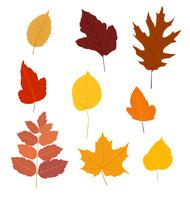 Ensemble de feuilles d'automne colorés isolé sur fond blanc - illustration vectorielle.