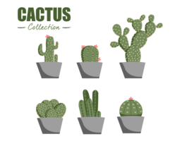 élément de vecteur de collection cactus plat