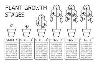 Stades de croissance des plantes infographiques. Icônes d'art au trait. Modèle d'instruction de plantation. Illustration de style linéaire isolé sur blanc. Planter des fruits, processus de légumes.