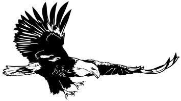 Aigle chauve volant vecteur