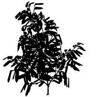 Silhouette d'arbre exotique vecteur