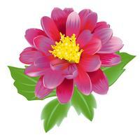 Belle fleur exotique rose vecteur