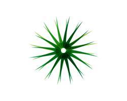 Logo de motifs floraux feuille verte et symboles sur fond blanc
