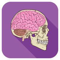 icône de cerveau pourpre vecteur