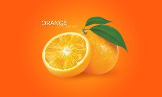 Oranges réalistes en vecteur
