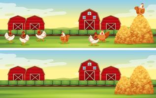 Poulets et grange dans la basse-cour