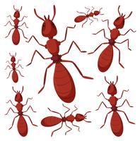 Groupe de fourmis sur fond blanc vecteur