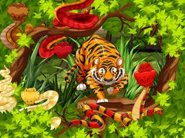 Serpents sauvages et tigres dans les bois