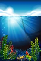 Scène avec la mer bleue et sous l'eau