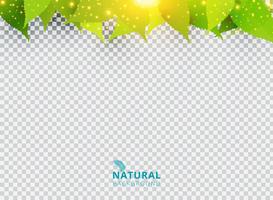 Fond vert naturel printemps été avec feuilles et effet de lumière sur fond transparent. vecteur
