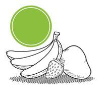 fruits dessinés à la main vecteur
