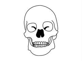 Vecteur de crâne humain