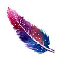 Belle plume d'aquarelle