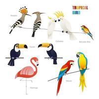ensemble d'oiseaux tropicaux