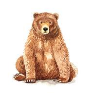 Aquarelle portrait d'ours brun assis