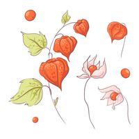 Rameau dessiné à la main physalis et fleurs, automne et feuilles. vecteur