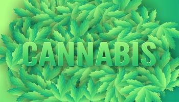 Feuilles de cannabis avec mot cannabis sur le dessus vecteur