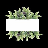 cadre de feuille d'olive de style aquarelle avec un espace pour le texte vecteur