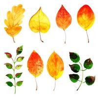 Belle collection de feuilles d'automne aquarelle