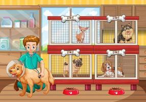 Vétérinaire vérifiant beaucoup de chiens à l'hôpital vecteur