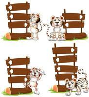 Tigre blanc avec des signes en bois