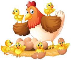 Poule et poussins au nid
