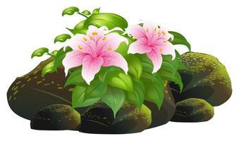 Lys rose fleurs et rochers sur fond blanc vecteur