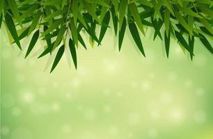 Un fond de feuille de bambou vert vecteur