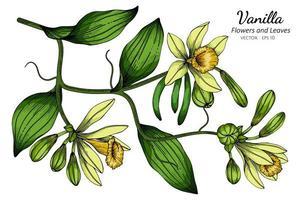dessin de fleur et feuille de vanille vecteur