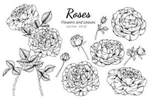 collection rose fleurs et feuilles