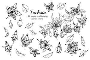 collection de fleurs et de feuilles fuchsia