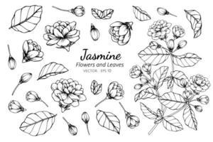 collection de fleurs et de feuilles de jasmin vecteur