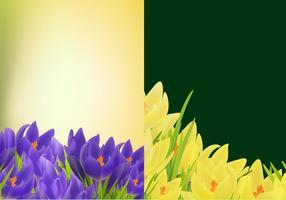 Pack de vecteur de fond de tulipe