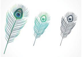 Vecteur isolé de plumes de paon isolé