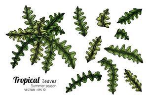 ensemble de feuilles de fougère maigres vecteur