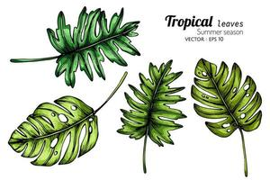ensemble de grandes feuilles tropicales
