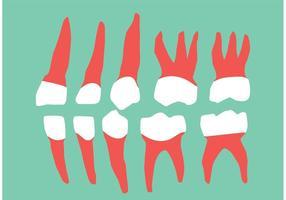 Dents et gencives vectorielles vecteur