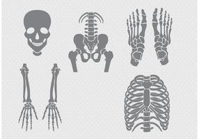 Vecteurs d'os et d'articulations vecteur