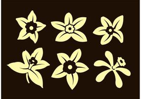Fleurs de vanille vecteur