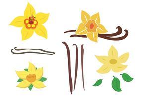 Pack de fleurs vanille vectoriel