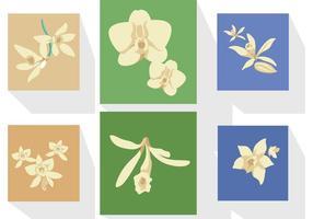 Vecteurs de fleurs de vanille vecteur