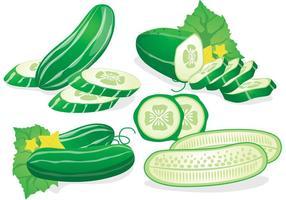 Vector de concombre frais